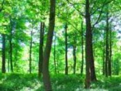 Green Deal: planting more trees in Europe to counter climate change
